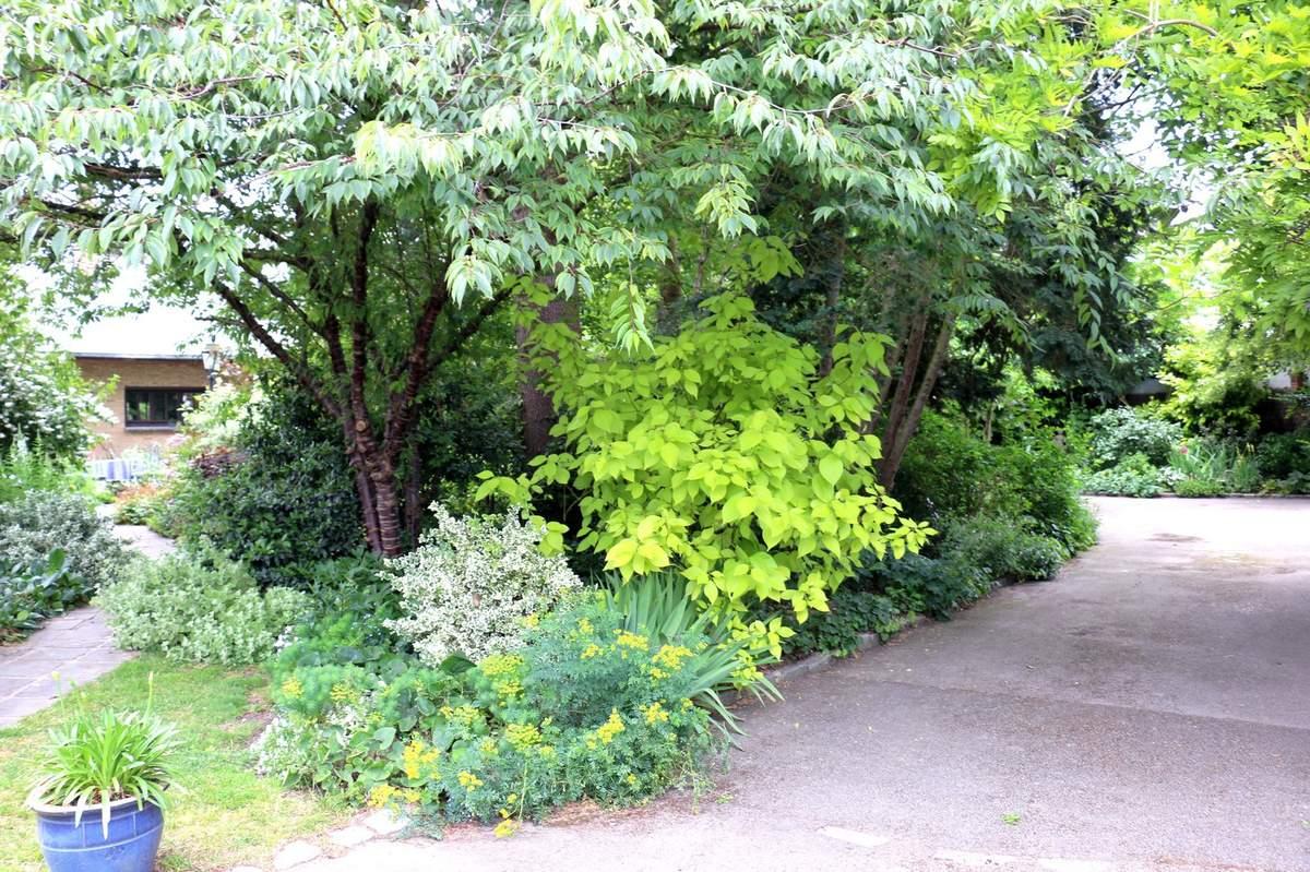 Jardin japonais dessin jardins japonais ditions dessain for Dessiner son jardin
